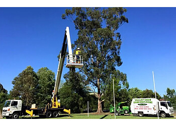 3 Best Tree Services In Morwell Vic Expert Recommendations