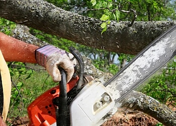 BDS Tree Care Pty Ltd