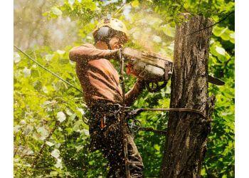 Barlows Tree Services