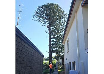 Ben Hastings Tree Service