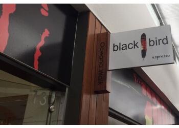 Blackbird Espresso