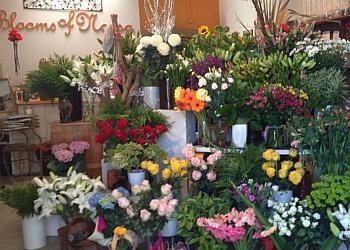 Blooms of Noosa