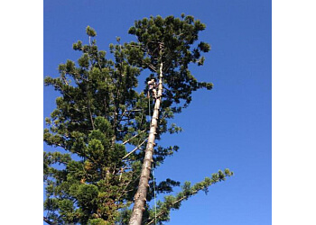 CQ Trees