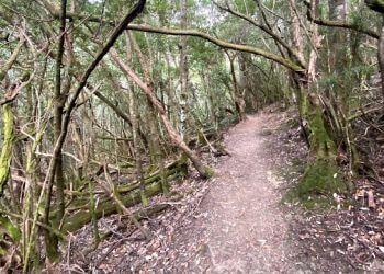 Cascades Track
