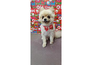 Doggie Fashion Grooming Salon