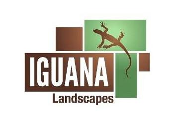 Iguana Landscapes