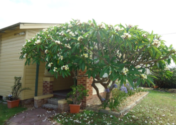 Nowra Bowen Therapy Clinic