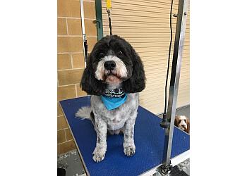 Scooby & Friends Dog Grooming