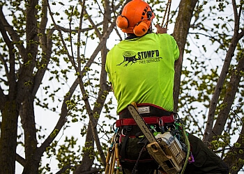 Stump'd Tree Services
