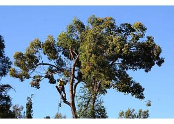 TreeBiz Tree Services