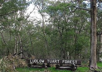 Tuart Forest National Park Trail